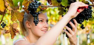 i giovani e il vino