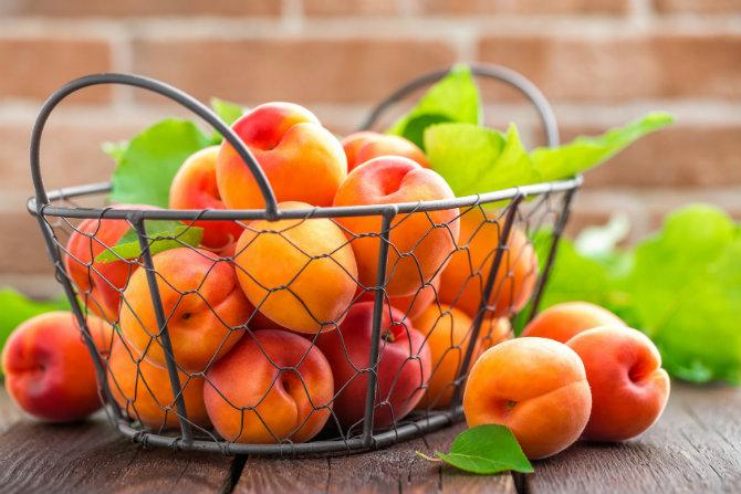 Frutto del mese: le albicocche