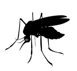 punture di zanzare