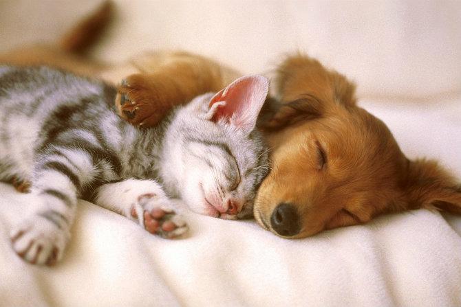 Animali domestici e salute