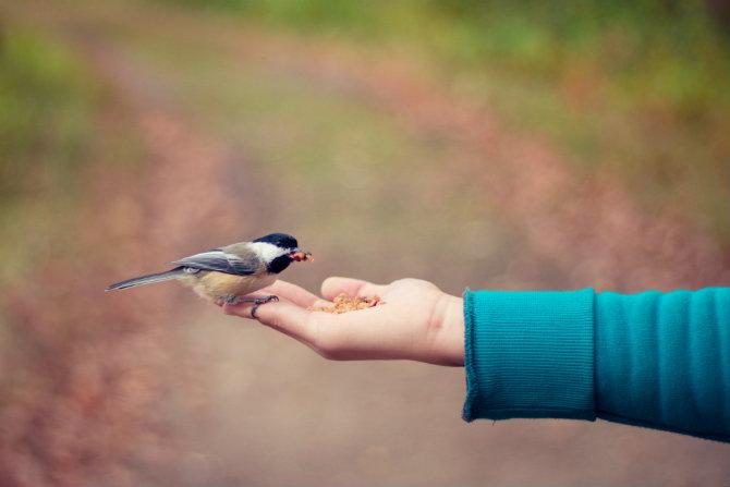giornata mondiale della gentilezza 2018