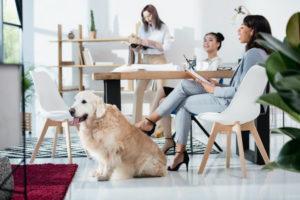 benefici cani in ufficio