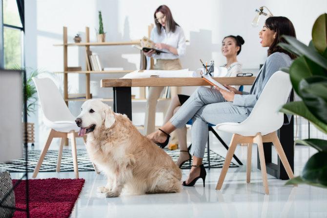 Più sereni e produttivi con i cani in ufficio