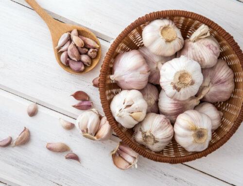 L'ortaggio del mese: l'aglio