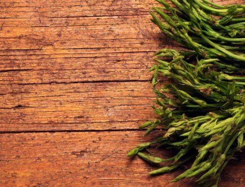 L'ortaggio del mese: il luppolo